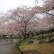 【実施報告】4月11日(火) ミニ:YRを歩こう