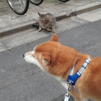 近所の猫のジン君