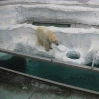 上野動物園遠足