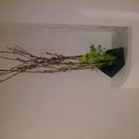 ネコヤナギ&菜の花