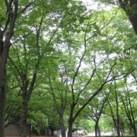 長居公園、緑に笑う