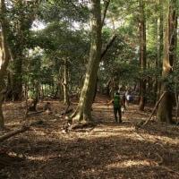 鰐淵寺の森