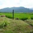 畦の草刈り3回目