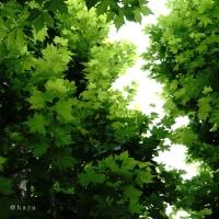 緑の向こう側