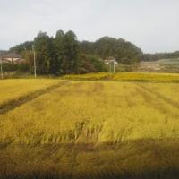 仙台まるごとパスで鉄道旅