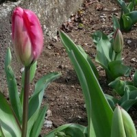 春なのに🎵