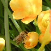 蜜蜂の知恵。
