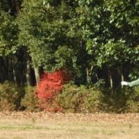 第92回南相馬マンスリーディスクゴルフ大会開催しました!!