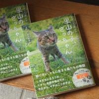 猫のさっちゃんの物語