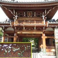 幸村探索・大坂「かつては桜の名所とか…」