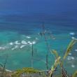 Hawaiiの余韻。。。。。