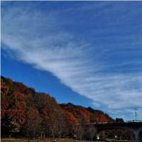 散紅葉と飛行機雲と越冬昆虫達