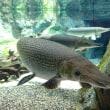 娘のターゲットは「ガー」という魚