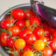 7月の庭からの贈りもの・・・赤い宝石・・・ミニトマト