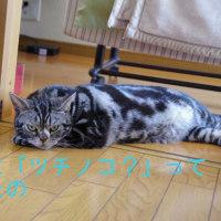 暑すぎです(>_<)