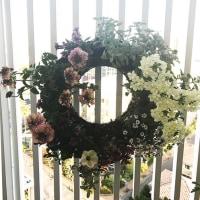 お花屋さんロベリア