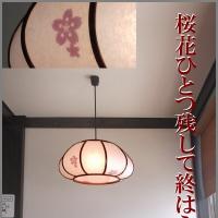 俳句写真1530 桜花