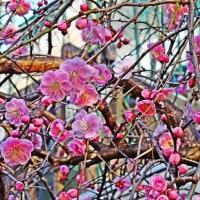天竺川の自然・4回目・2月後半・2017.2.16~2.28