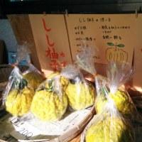 獅子柚子と銀杏 販売中