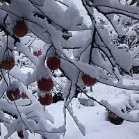 一晩で冬景色