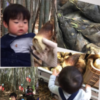 ゆいと君♪初のタケノコ堀りo(^_^)o