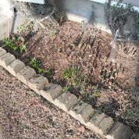 お庭メンテナンス 始めました。