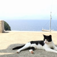 瀬戸内A島の猫たち 2016年 7月 その5