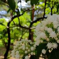 ★春のばらフェスタ@神代植物園