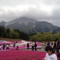 2016年 秩父芝桜
