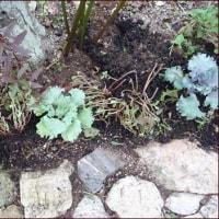 小道に葉ボタンを植える