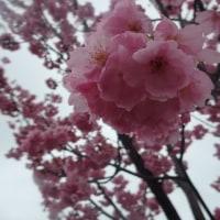 2017富山県の風景編037