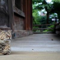 東京下町ねこ散歩Ⅹ 2016年9月 その1