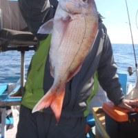 1月13日(金)一つテンヤマダイの釣果