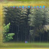 『 一からの道に帰らん竹落葉 』平和の砦575交心qv1009