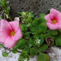 庭の片隅で咲く花!