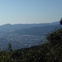 セリバオウレンの「四王寺山」