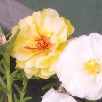 テラスの花  19