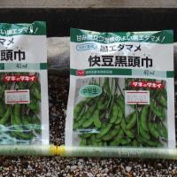 枝豆の種蒔き、第2弾。