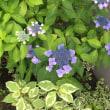 幻想的な蓮の花