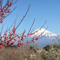 梅薫る季節