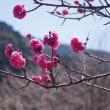 春のひとこま