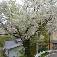 咲花温泉・碧水荘
