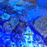 竹島水族館へ。