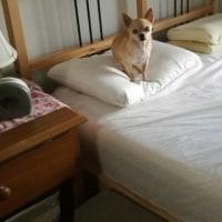 うわぁぁ~ベッドの上に~~