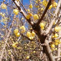 岡野俊一郎氏の訃報に思うこと/立春の日の植物園