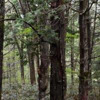 朝の森のコルリさん♪