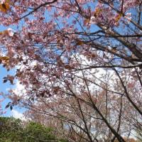 西ヶ丘 お花見サロン