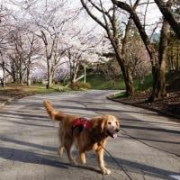 The Memories of Towa「お花見編」