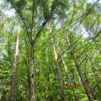 新緑の森で深呼吸 そして貴重な体験^^