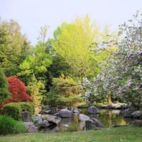 水城公園の花